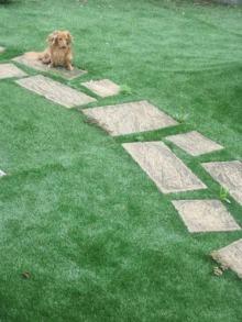 アプローチのリアル人工芝