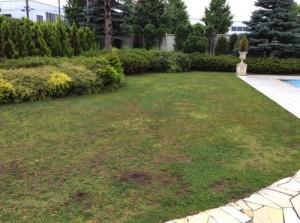 天然芝の庭