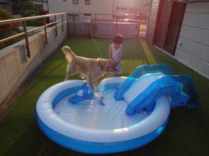 犬とプール