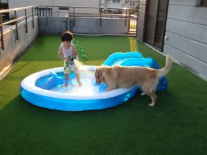 犬と子供と庭