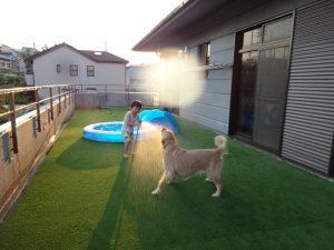 犬と子供と人工芝