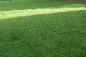 人工芝 水たまり