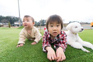 芝上の赤ちゃんと犬
