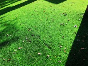 人工芝の掃除_落ち葉